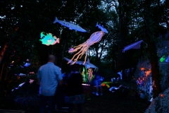 """Festival """"Sous les étoiles"""" 2015 à La Popine de Rillé 86500 Jouhet."""